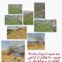 آتش سوزی در اراضی کشاورزی و طرح های درختکاری کلگه