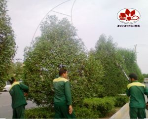IMG 20191113 210337 927 300x241 شهر اهواز به گیاه کنوکارپوس مدیون است